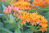 Branching Out Webinar: Native Plantings in the Landscape